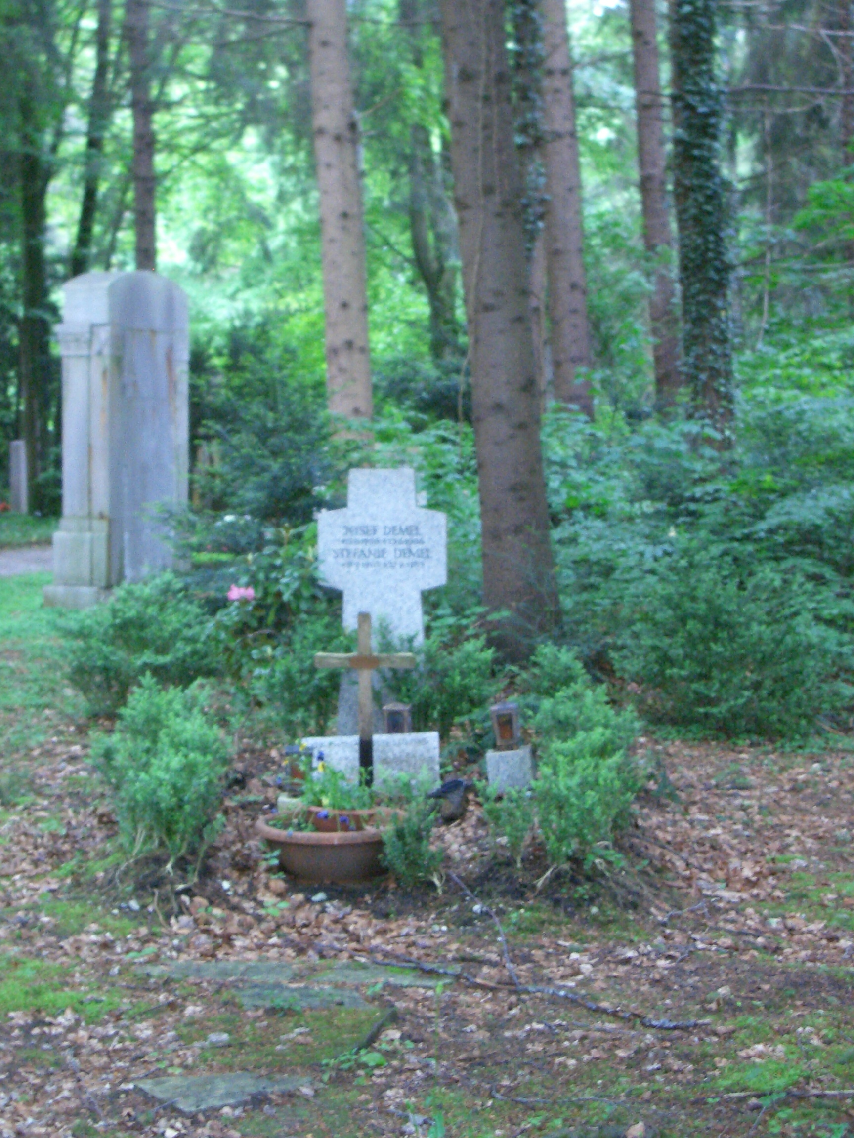 cemetery in the forest - photo #6