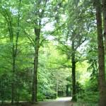 Waldfriedhof 6