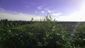Perlacher Mugl view/Aussicht